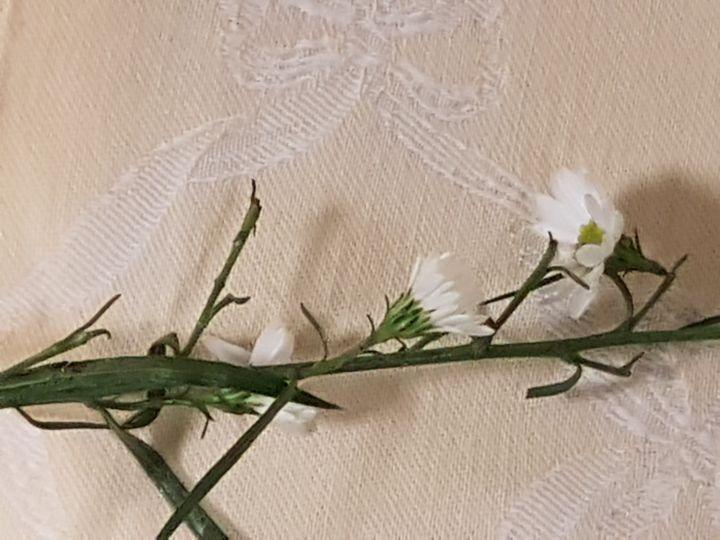 fiore in un bouquet: cv di Symphyotrichum sp.