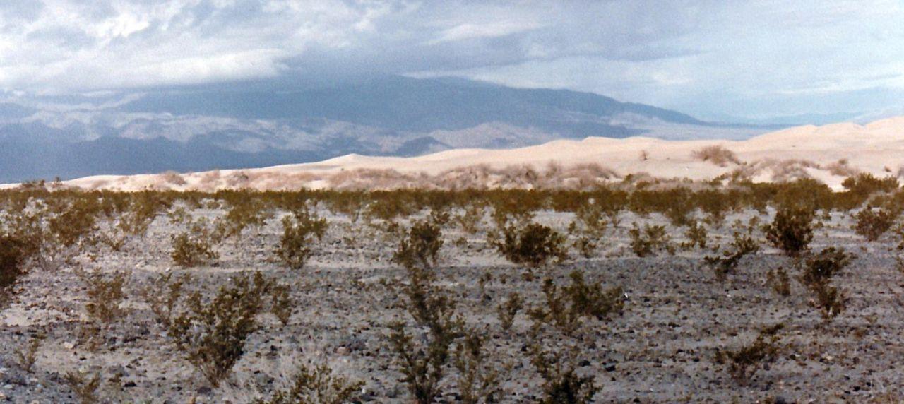 Dalla California, Death Valley: Phoenix dactylifera (ed altra vegetazione))