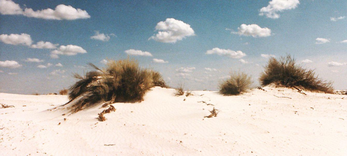 Dal New Mexico:  tra le dune di gesso delle White Sands