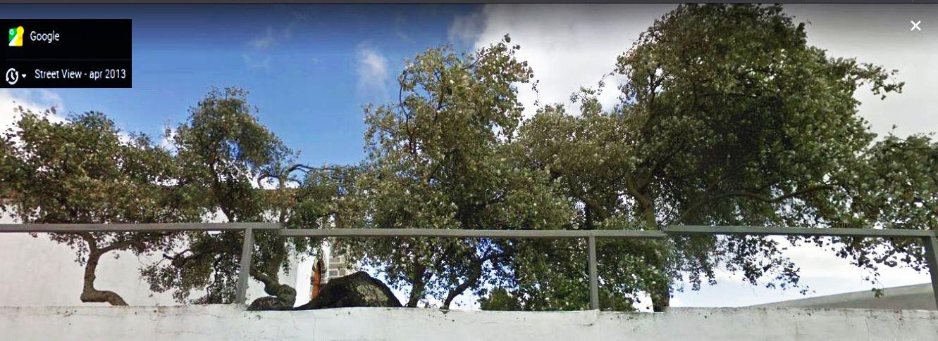 Da La Gomera (Canarie):  CFR: Aleurites moluccanus (Euphorbiaceae)